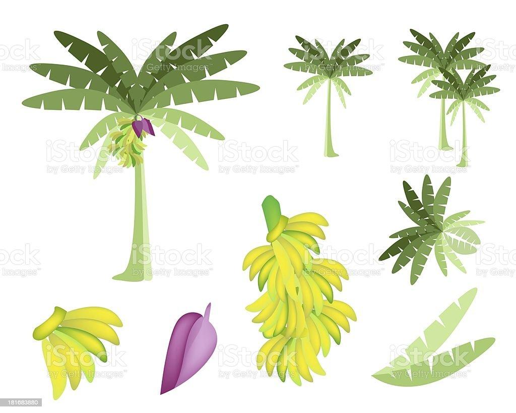 Set of Banana Tree with Bananas and Blossom vector art illustration