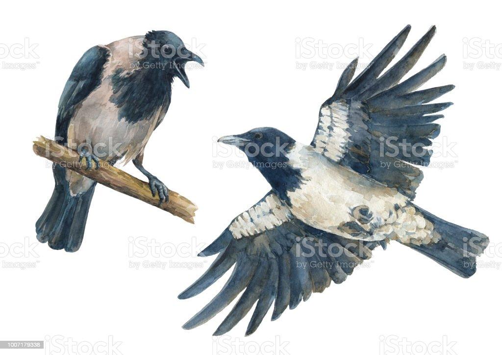 Ilustración de Conjunto De Coloridas Aves Cuervo Enojado Y Cuervo ...