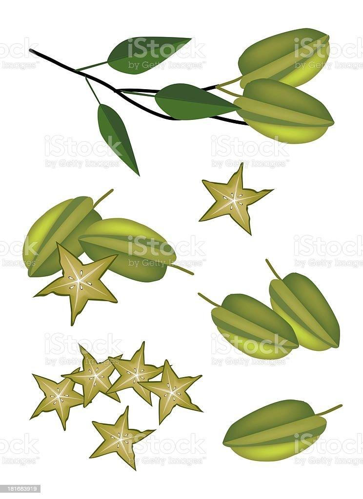 Set of Delicious Fresh Green Carambolas royalty-free stock vector art