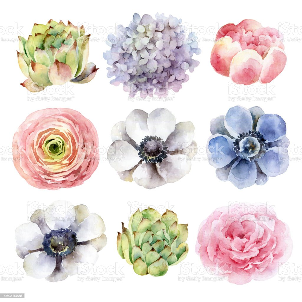 Set of different flowers on white background royalty-free set of different flowers on white background stock illustration - download image now