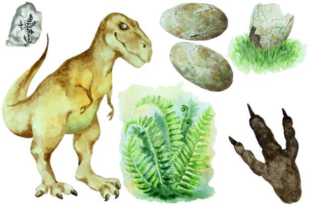 set of dinosaur tyrannosaurus rex, eggs, shell, fern bush and footprint, hand drawn watercolor. - fossilized leaves stock illustrations
