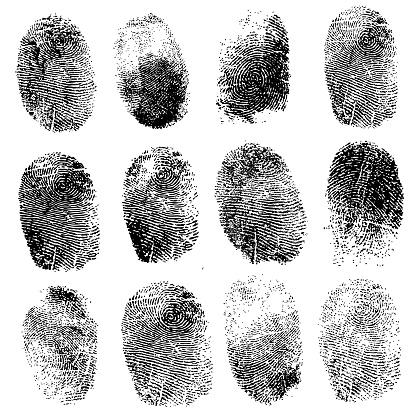 Set of fingerprints,  illustration isolated on white