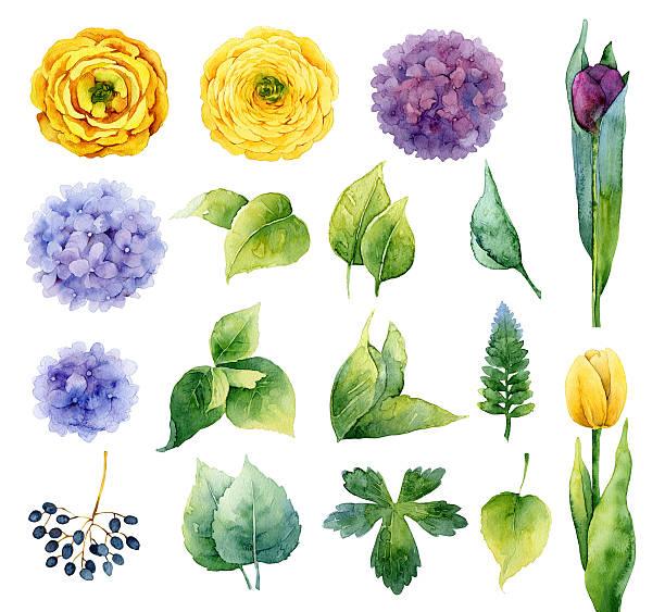 illustrazioni stock, clip art, cartoni animati e icone di tendenza di set di elementi floreali - mika