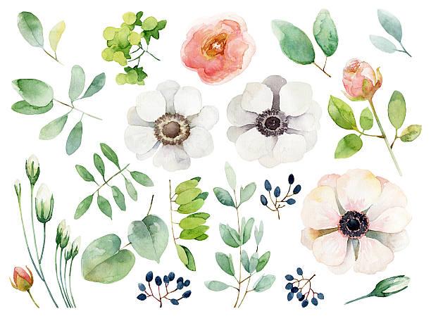 illustrazioni stock, clip art, cartoni animati e icone di tendenza di gruppo di elementi floreale su sfondo bianco - mika