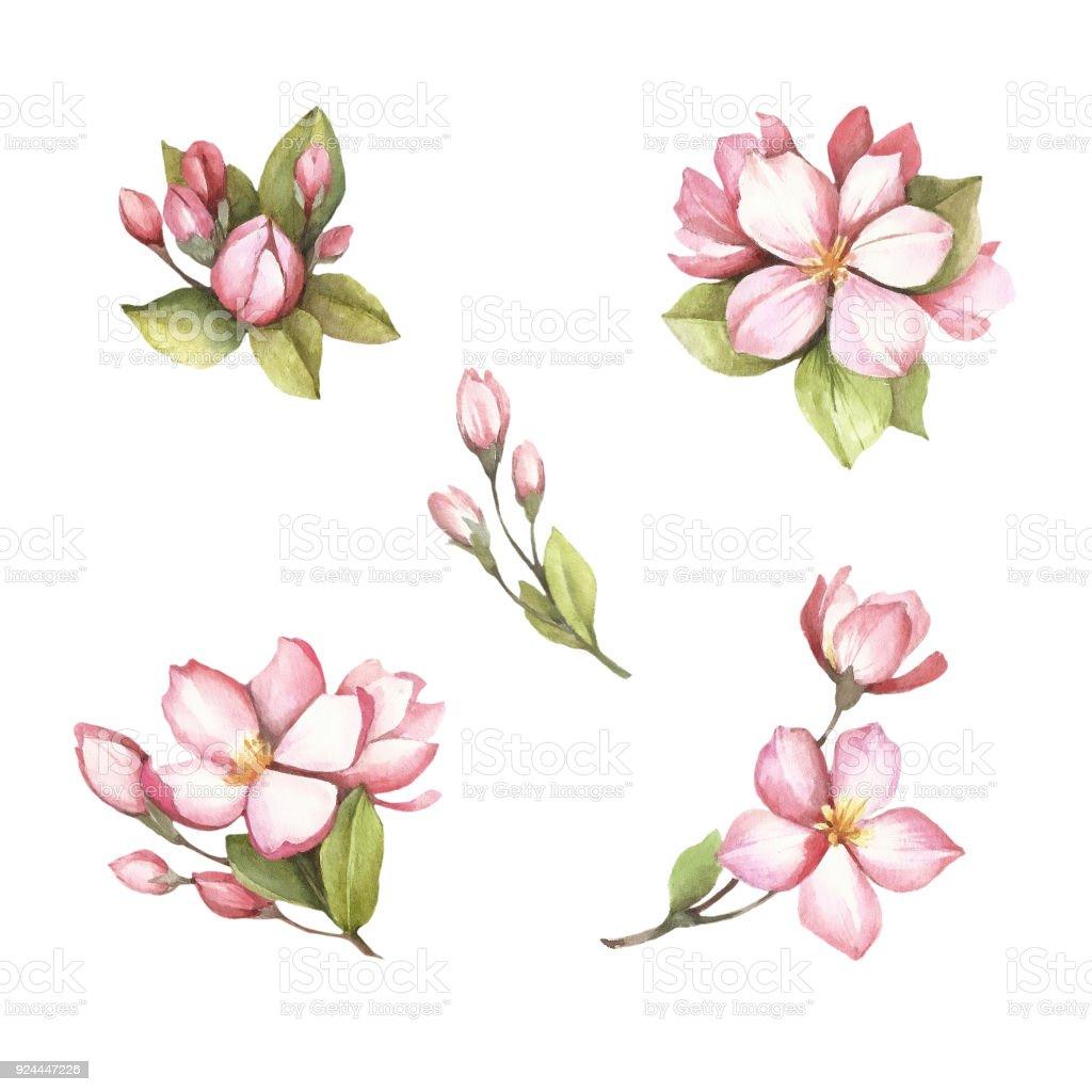 Vetores De Conjunto De Ramos De Flores De Sakura Mao Desenhar