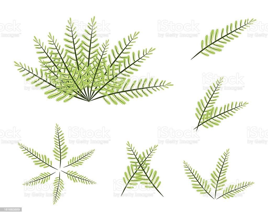 Set of Green Fern on White Background vector art illustration