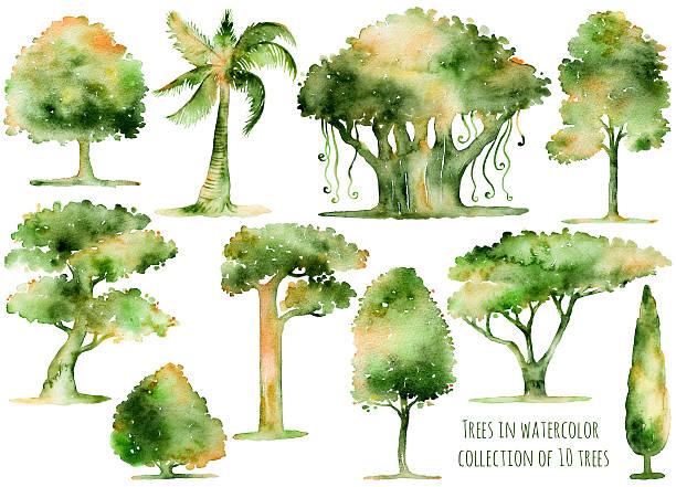 Conjunto de árboles de acuarela dibujadas a mano. - ilustración de arte vectorial