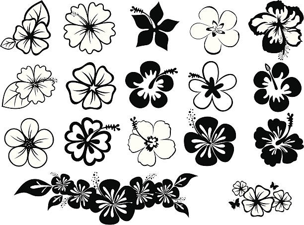 set of hibiscuses set of icons of hibiscus and plumeria frangipani stock illustrations