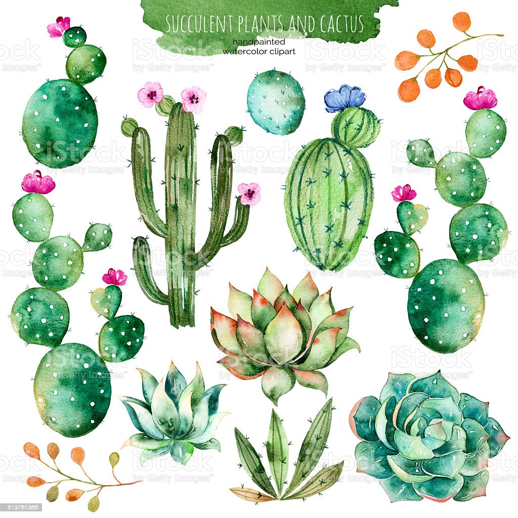 Set of high quality hand painted watercolor succulent and cactus vector art illustration