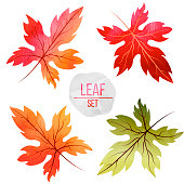 Set of leaves in autumn colors with watercolor texture isolated on white background