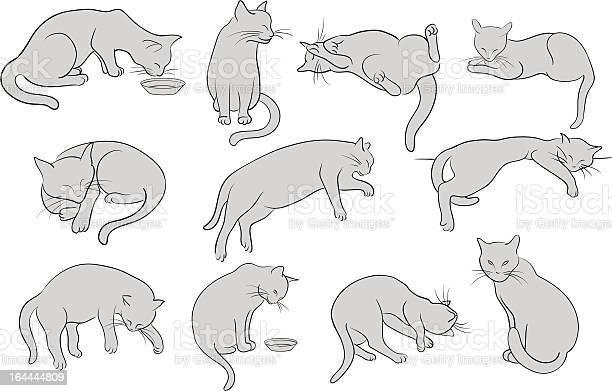 Set of line cats silhouette illustration id164444809?b=1&k=6&m=164444809&s=612x612&h=drhw1gpcbvkwhmvplgbcgmre1hctkae9pzjlo5u39gi=