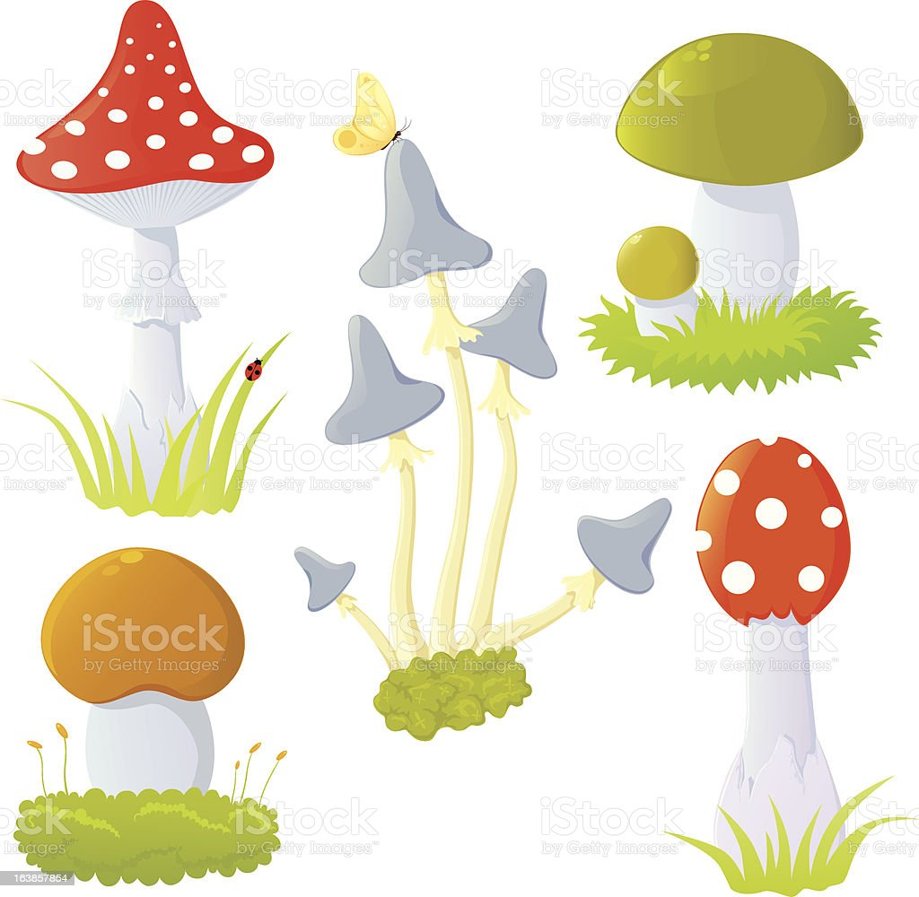 Set of mushrooms. vector art illustration