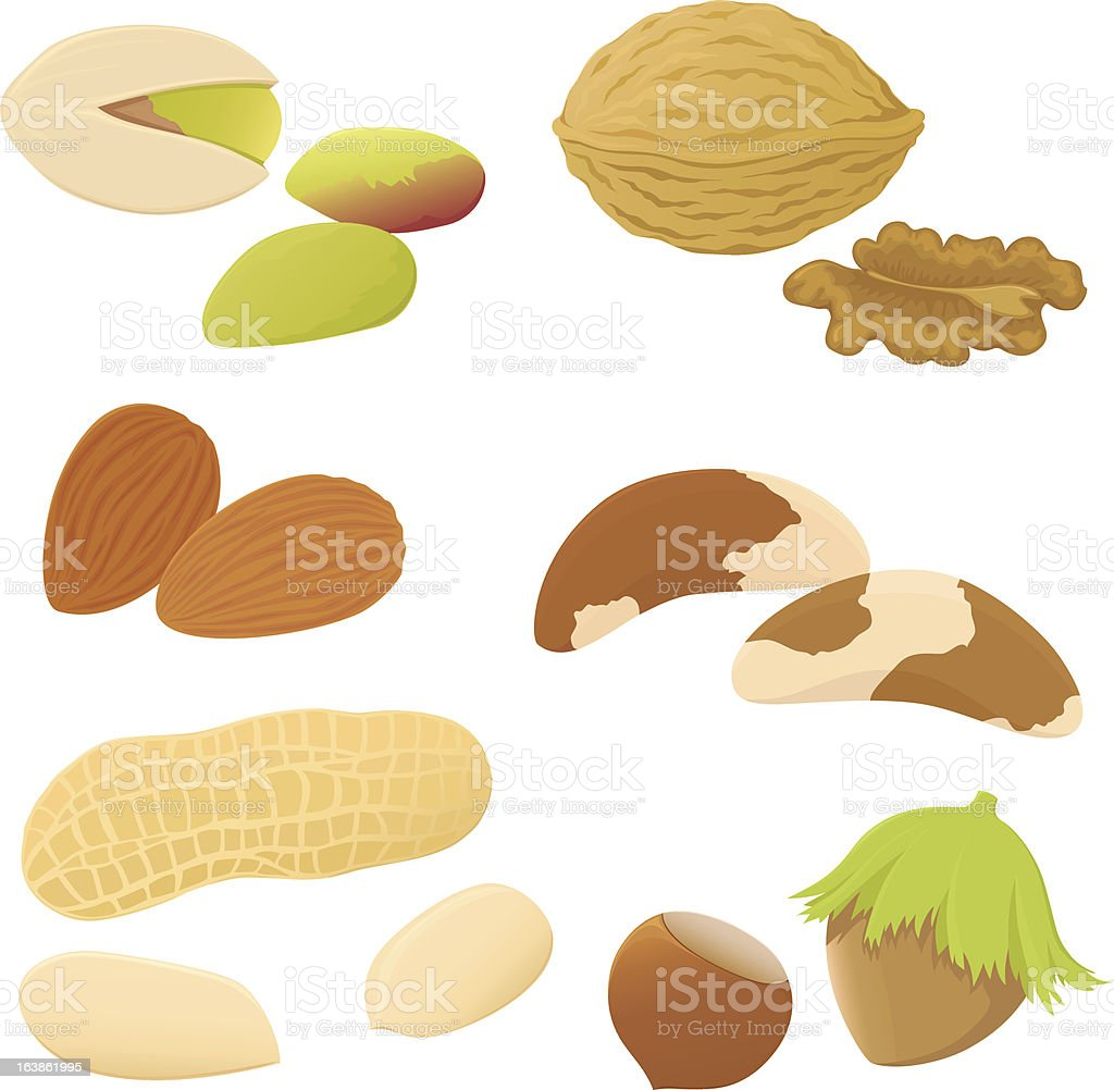 Set of nuts. royalty-free stock vector art