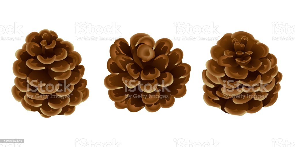 A set of pine / cedar cones in a realistic style for decorations. Christmas. New Year . isolated on white background without shadow. vector art illustration