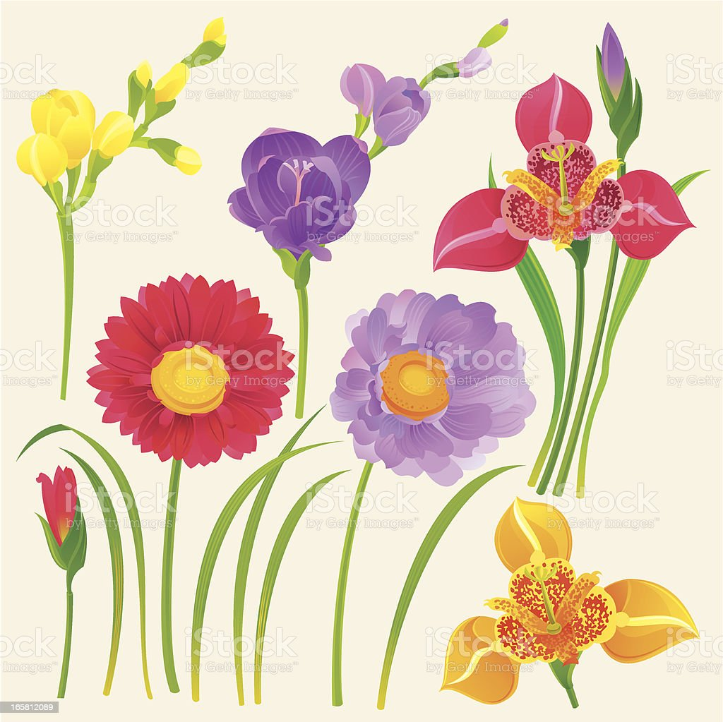 Set Of Spring Flowers Stock Vector Art More Images Of Blossom