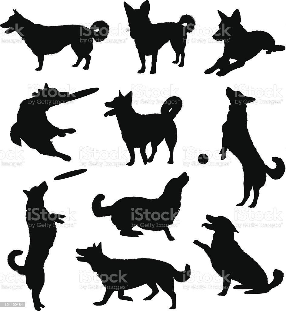 Set of ten black silhouetted dogs vector art illustration