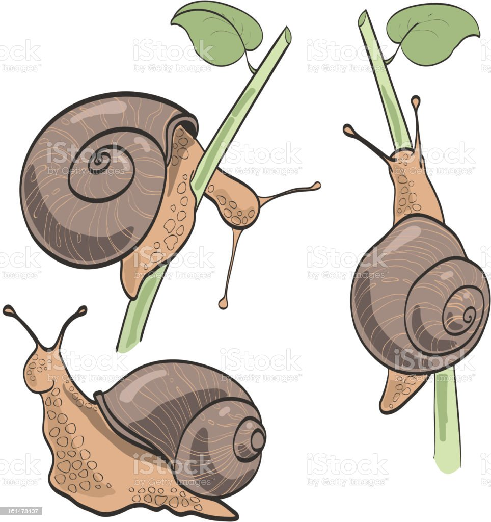 Set of three snails, isolated on white royalty-free stock vector art