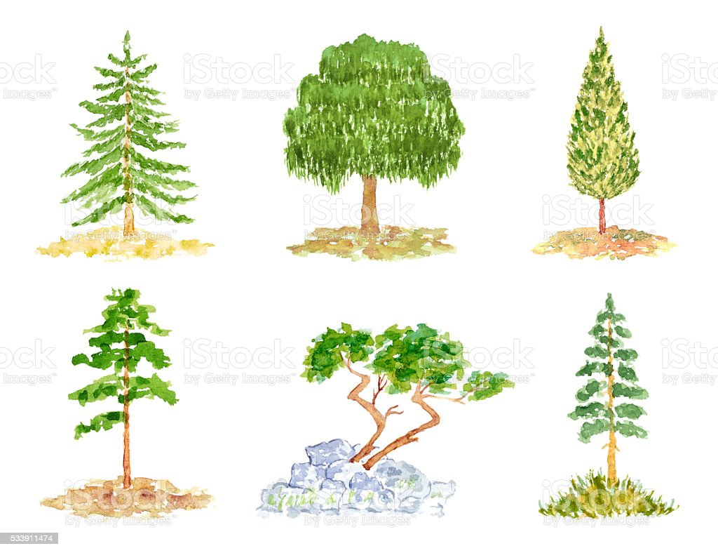 Set of Trees, Watercolor Hand Drawn and Painted vector art illustration