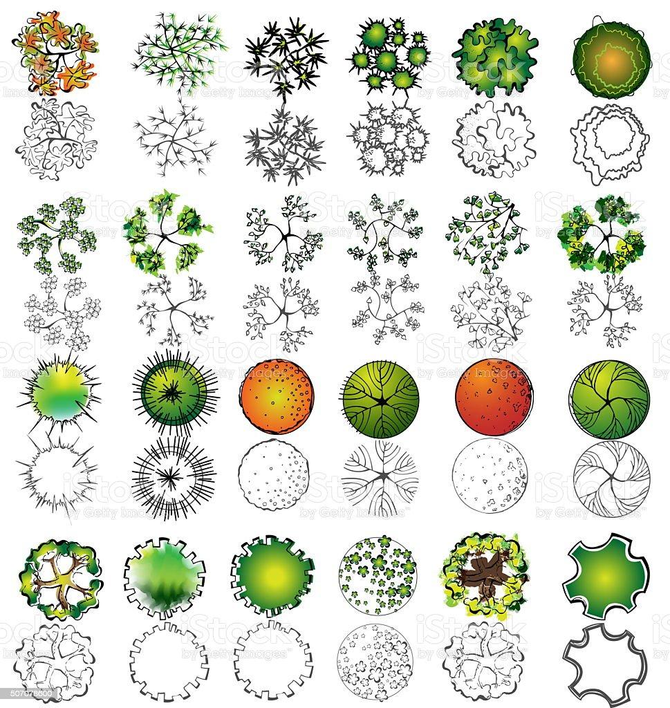Set Of Treetop Symbols For Architectural Or Landscape Design Stock Vector Art U0026 More Images Of ...