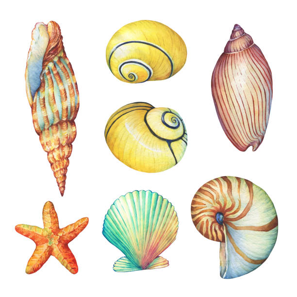 illustrazioni stock, clip art, cartoni animati e icone di tendenza di set of underwater life objects - illustrations of various tropical seashells and starfish. marine design. hand drawn watercolor painting on white background. - immerse in the stars