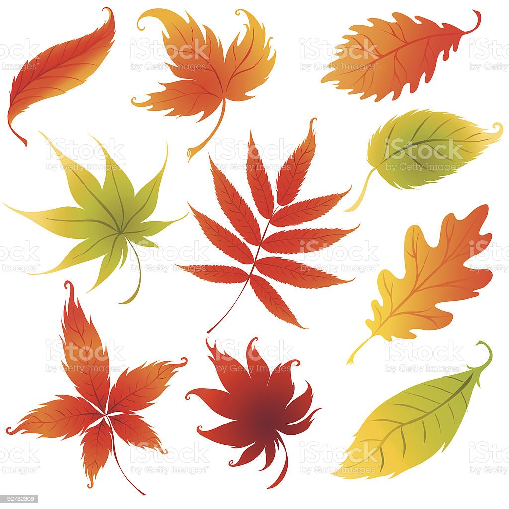 Set of vector autumn leaves design elements. royalty-free stock vector art