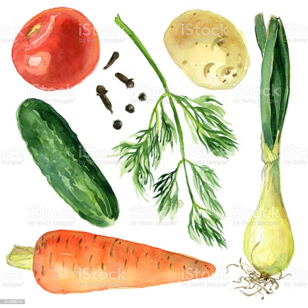 Set of vegetables, watercolor sketch. Carrots, cucumber, onion, tomato, potatoes, dill, spices vector art illustration