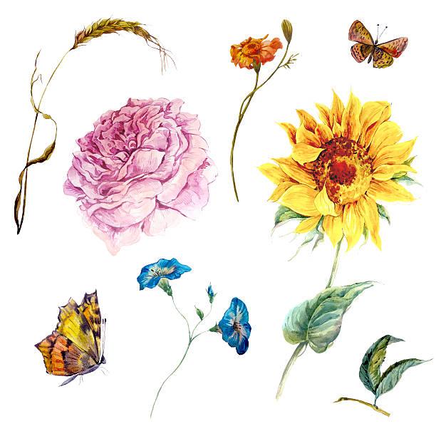 illustrazioni stock, clip art, cartoni animati e icone di tendenza di set di vintage acquerello foglie e fiori boccioli - farfalla ramo