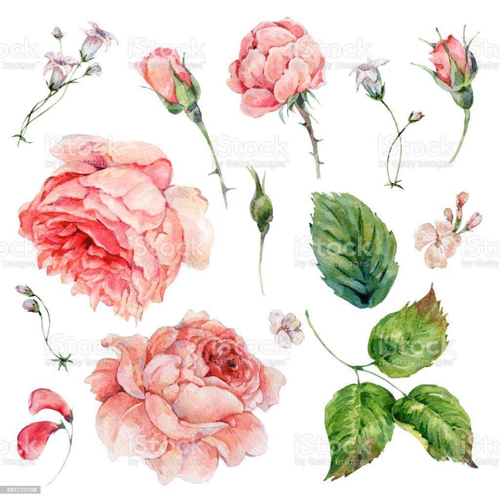 Set of vintage watercolor roses vector art illustration