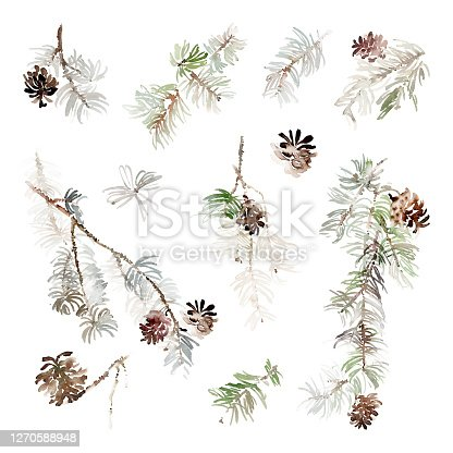 Set of watercolor Christmas pine branches with cones to create greeting cards