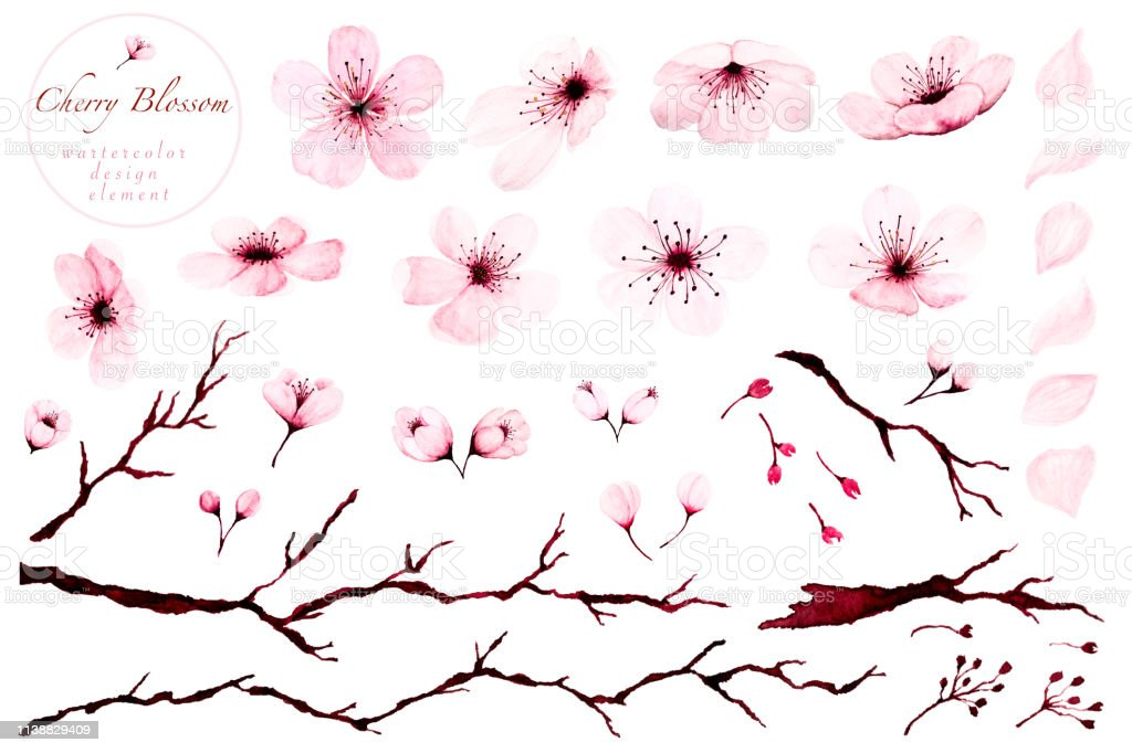 Set of watercolor design elements, Cherry blossom branches hand...