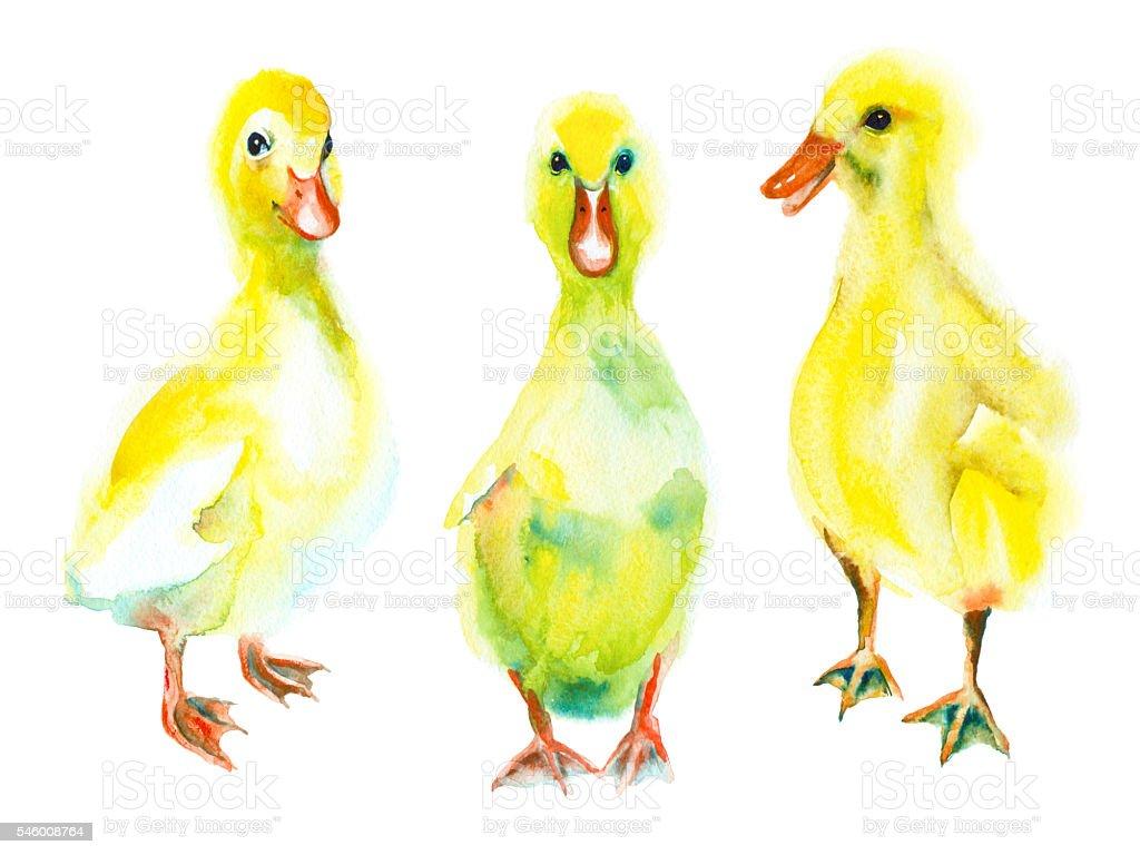 Set of watercolor ducklings . vector art illustration