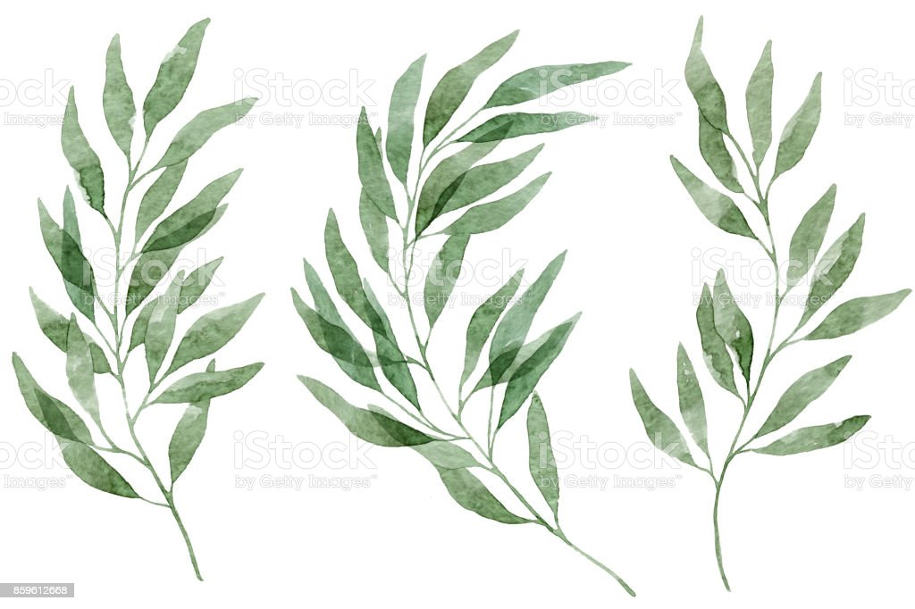 Set of watercolor eucalyptus leaves and branches vector art illustration