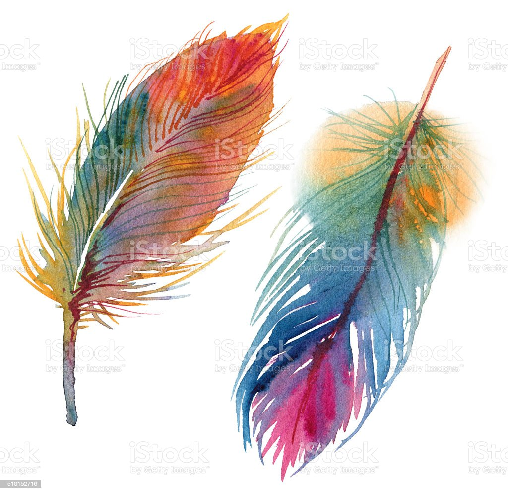 Set of watercolor feathers vector art illustration