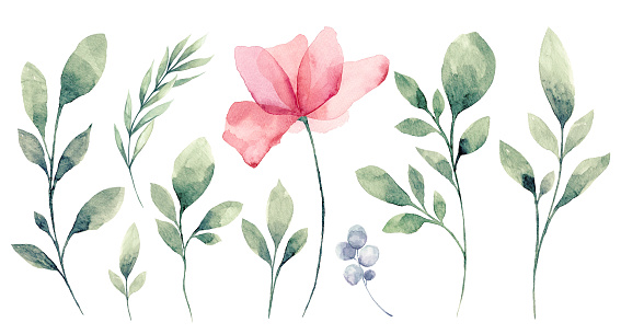 Set of watercolor Flower and green leaves