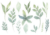 istock Set of watercolor Flower and green leaves 1235499650