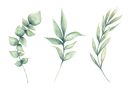 Set of watercolor green leaves clipart