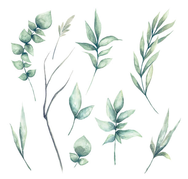 ilustrações de stock, clip art, desenhos animados e ícones de set of watercolor green leaves clipart - flower white background