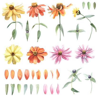 Set of watercolor hand drawn flowers calendula