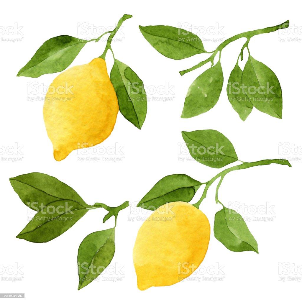 Ensemble de citrons aquarelles et feuilles - Illustration vectorielle
