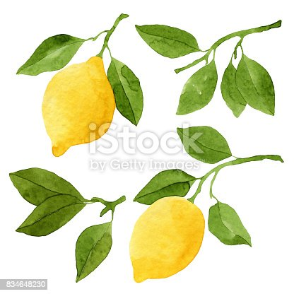 Set Of Watercolor Lemons And Leaves Stock Vector Art Amp More Images Of Art 834648230 Istock