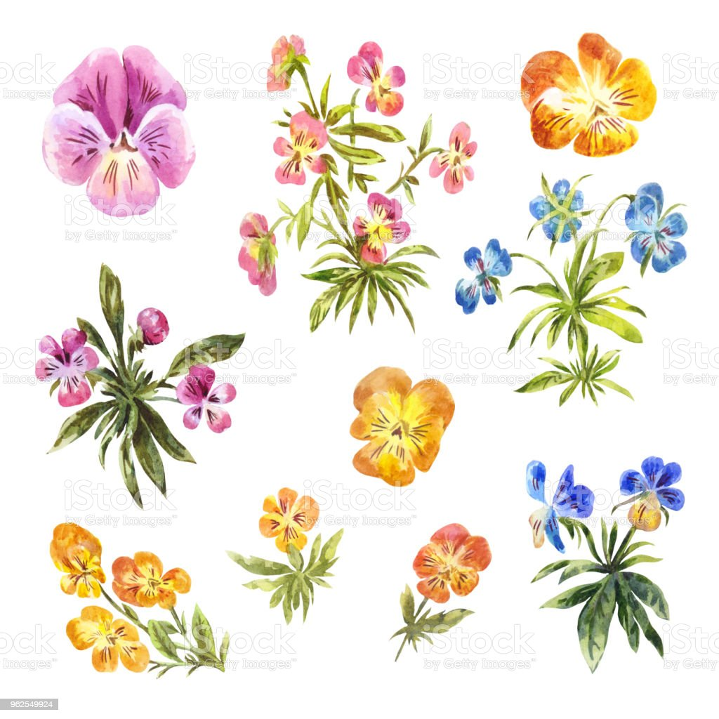 Set of watercolor little pansies isolated on white - Royalty-free Art stock illustration