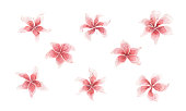 Set of watercolor pink lilies, single elements on a white background. Illustrations for design of postcards, weddings, invitations, fabrics, printing.