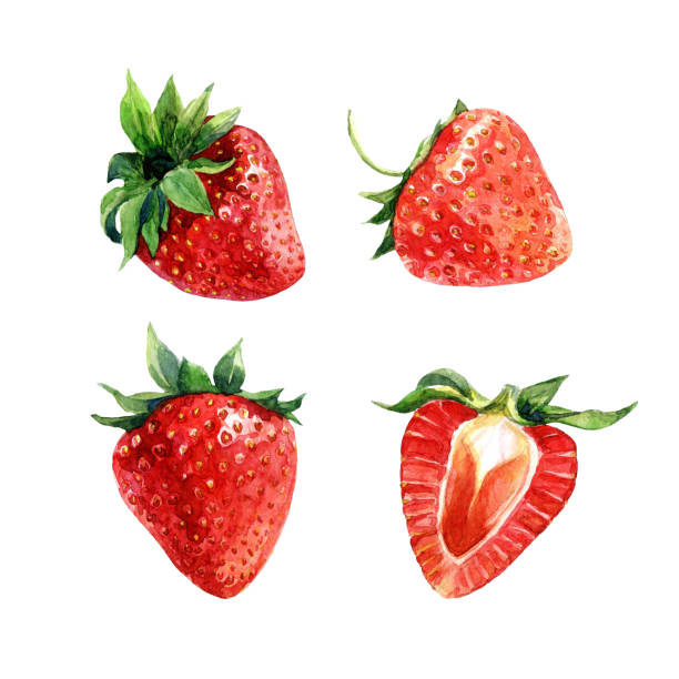 illustrazioni stock, clip art, cartoni animati e icone di tendenza di set of watercolor strawberries, whole berries and cut. - fragole