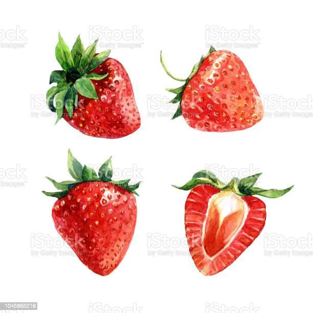 Set Of Watercolor Strawberries Whole Berries And Cut - Immagini vettoriali stock e altre immagini di Alimentazione sana