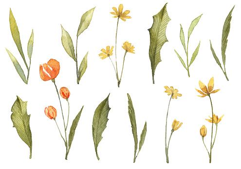 Set of watercolor wild flowers. Watercolor clip art objects isolated on white background. Botanical illustrations. Big collection of wild flowers.