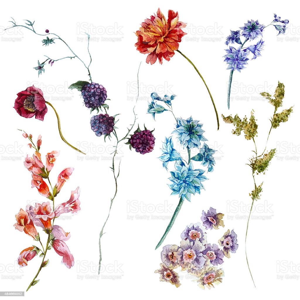 Set of watercolor wildflowers, sprigs leaves separately flower vector art illustration