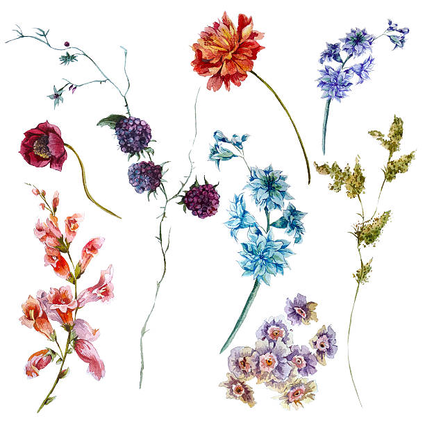 set of watercolor wildflowers, sprigs leaves separately flower - wildflowers stock illustrations, clip art, cartoons, & icons
