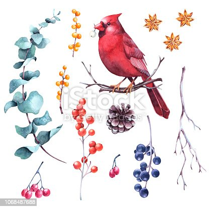 Set of watercolor winter berries, eucalyptus, cones, twigs and cardinal bird. Hand drawn isolated floral holiday design elements.