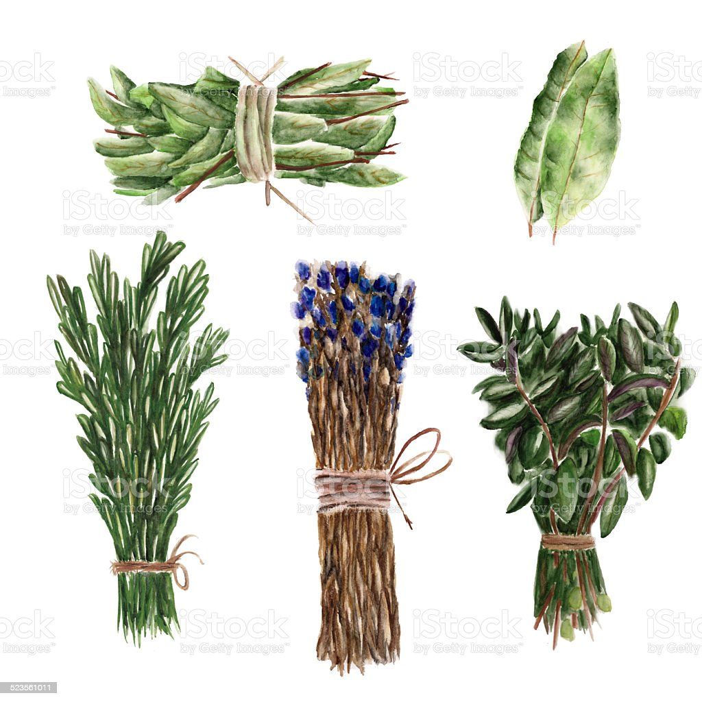 Set with bunches of basil, rosemary vector art illustration