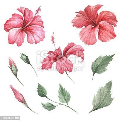 Set Mit Blumen Hibiskus Hand Zu Zeichnen Aquarell Abbildung Stock ...